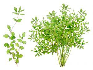 葉酸の画像